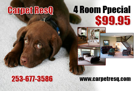 sample design carpet cleaning postcards